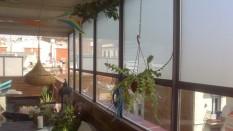 terraza11