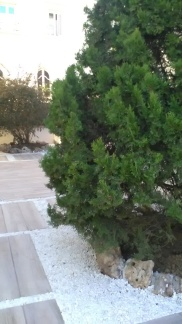 terraza-r5